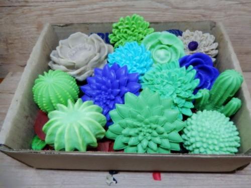 Cactus - caixa suculentas